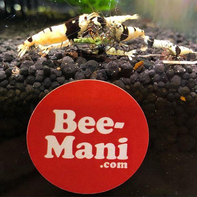 Bee-Mani ステッカーの上らへんにエサ️ #Bee-Mani #bee-mani