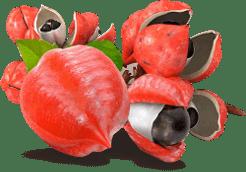 Bee Slim - Жиросжигающие капли