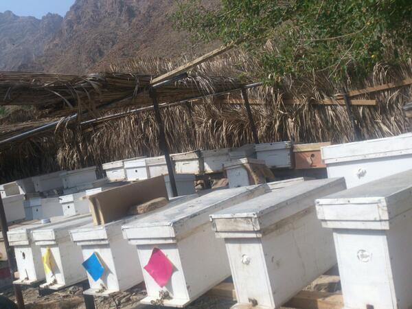 تقسيم النحل الصناعي أهدافها أنواعها طرقها الخطوات و الإجراءات المتبعة