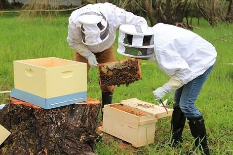 تقسيم طوائف النحل الإجراءات التحضيرية و الوقت المناسب لها أهدافها دوافعها