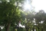 Sunshine2