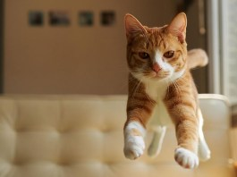 Jumping Cat Pictures