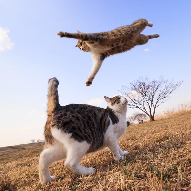 Jumping Cat 9