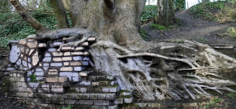 Parkland walk tree and wall