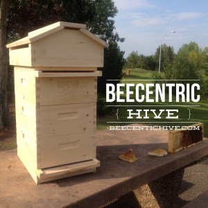 What Is A Beecentric Hive?