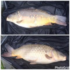 2 carp