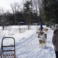 Dog Sledding in Canada