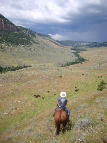 Beef Runner Travel