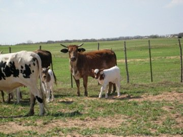 Calgary Stampede Rodeo, Animal Welfare, and Livestock Producer Reaction