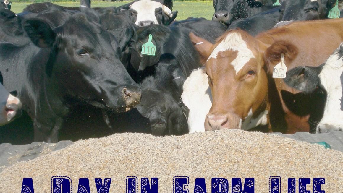 Day In Farm Life