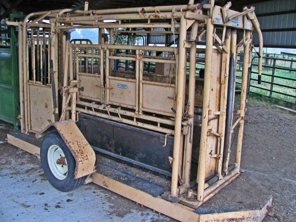 Preconditioning and Vaccines for Calves on the Ranch   Never Stop Learning