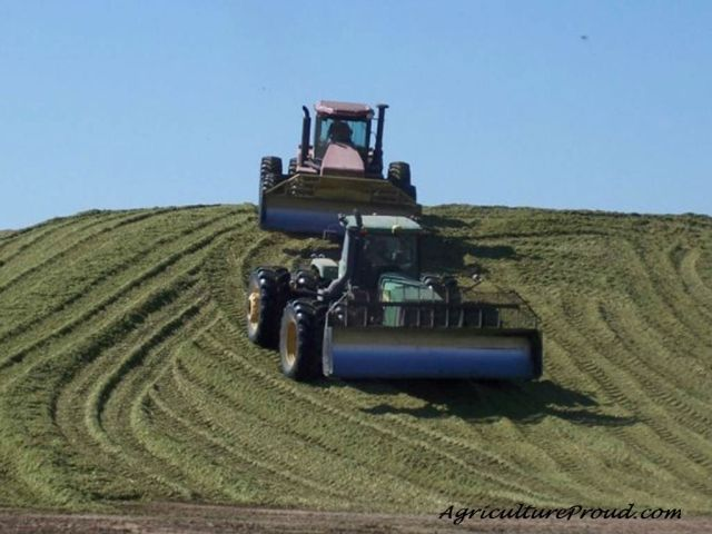 cattle feed corn silage
