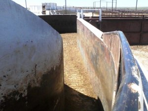 cattle feedlot antibiotics