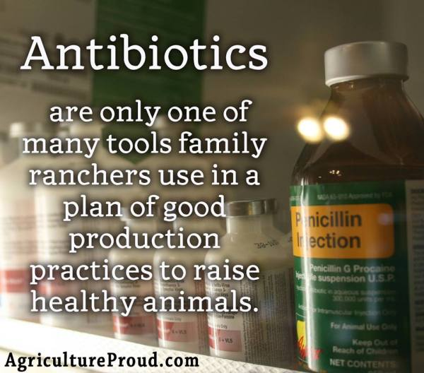 Ask A Farmer: How Are Antibiotics Used in Cattle?