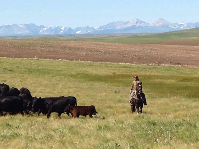 Kari Lynn Dell Montana Rancher