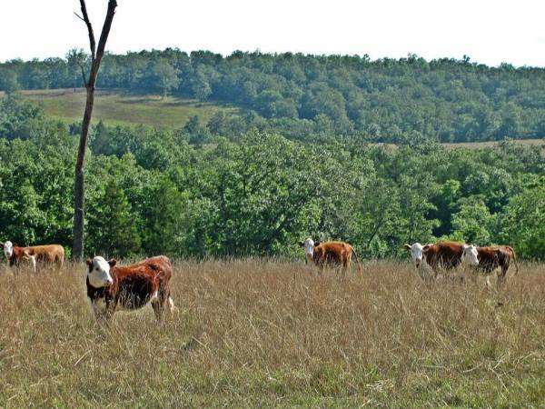 5 Tips for Managing Forage, Grazing Systems