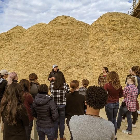 agriculture internship cattle feedyard feedlot