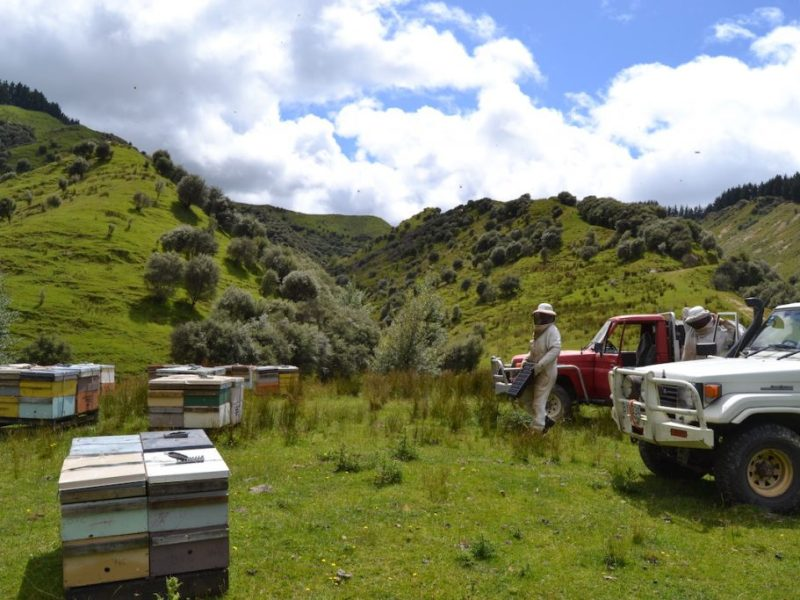 Bienenstand Neuseeland Manuka
