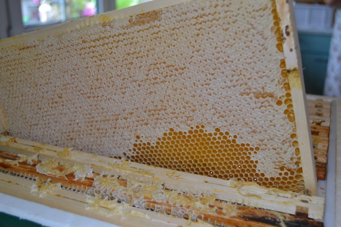 Honigwabe BeeHappy Honig von Felix Mrowka