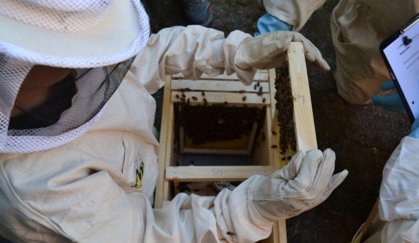 SchülerInnen begutachten ein Bienenvolk an der Leibnitzschule Hitzhusen beim Projekt Sommerbienen