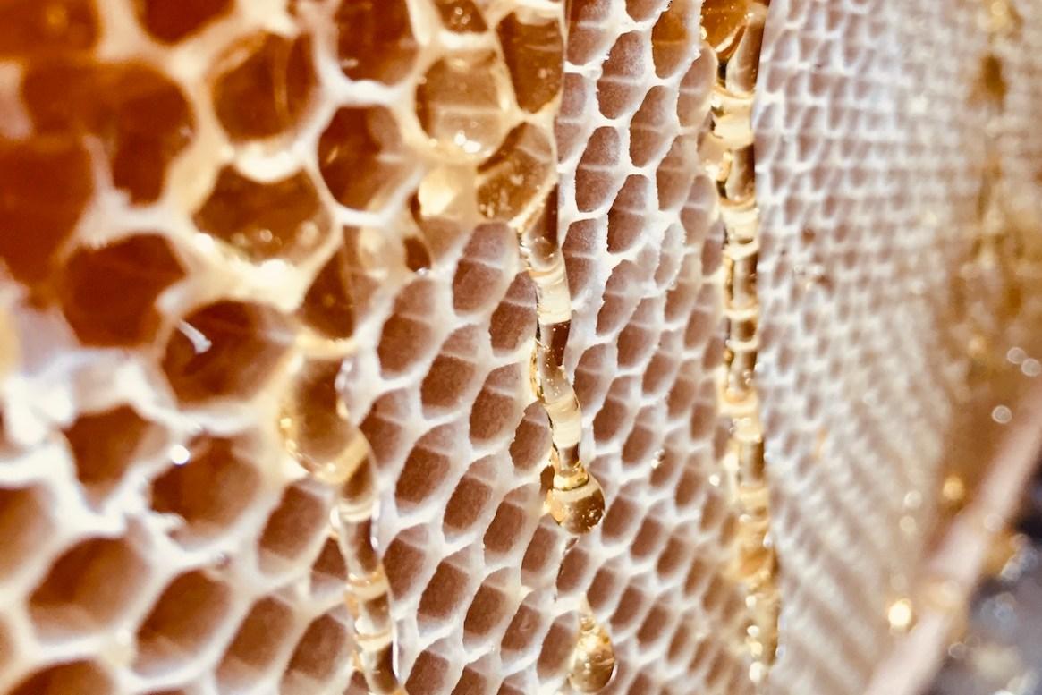 Lerne eigenen Honig zu ernten mit dem BeeHappy Neuimker*in Kurs