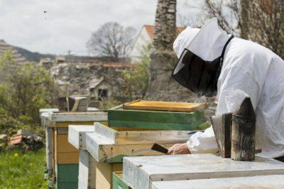 Titelbild - BeeHappy Neuimker*in Kurs