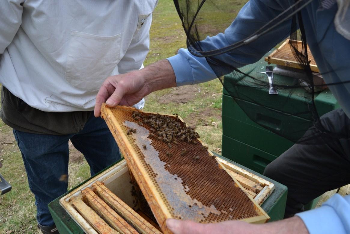 Die erste Volksdurchsicht im Bienenjahr nach dem Winter