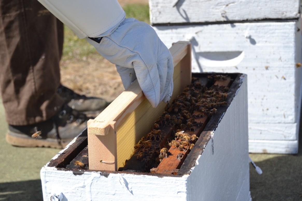 Ein Bienenableger wird erstellt