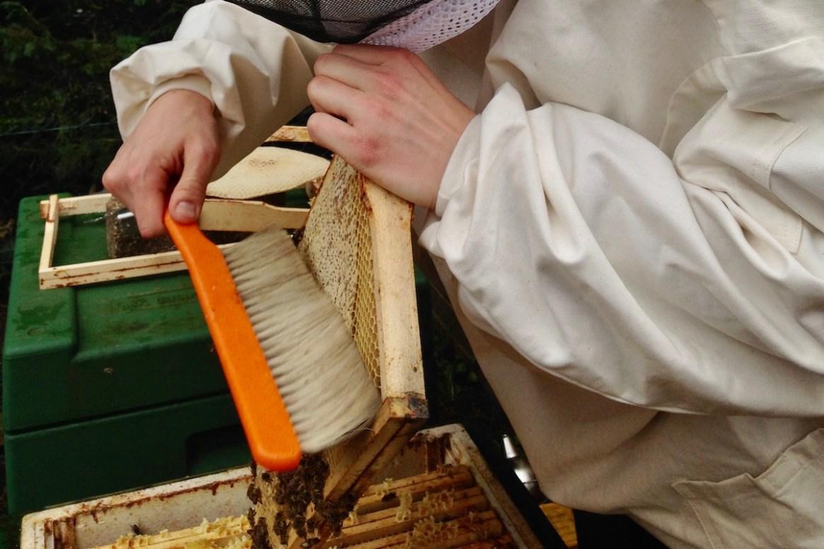 Ein Bienenbesen ermöglicht das leichte abfegen der Bienenwaben