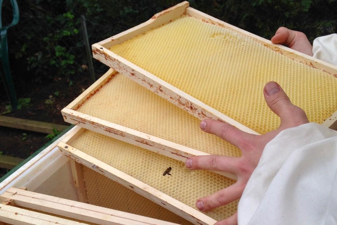 Honigwaben werden auf das Bienenvolk gesetzt