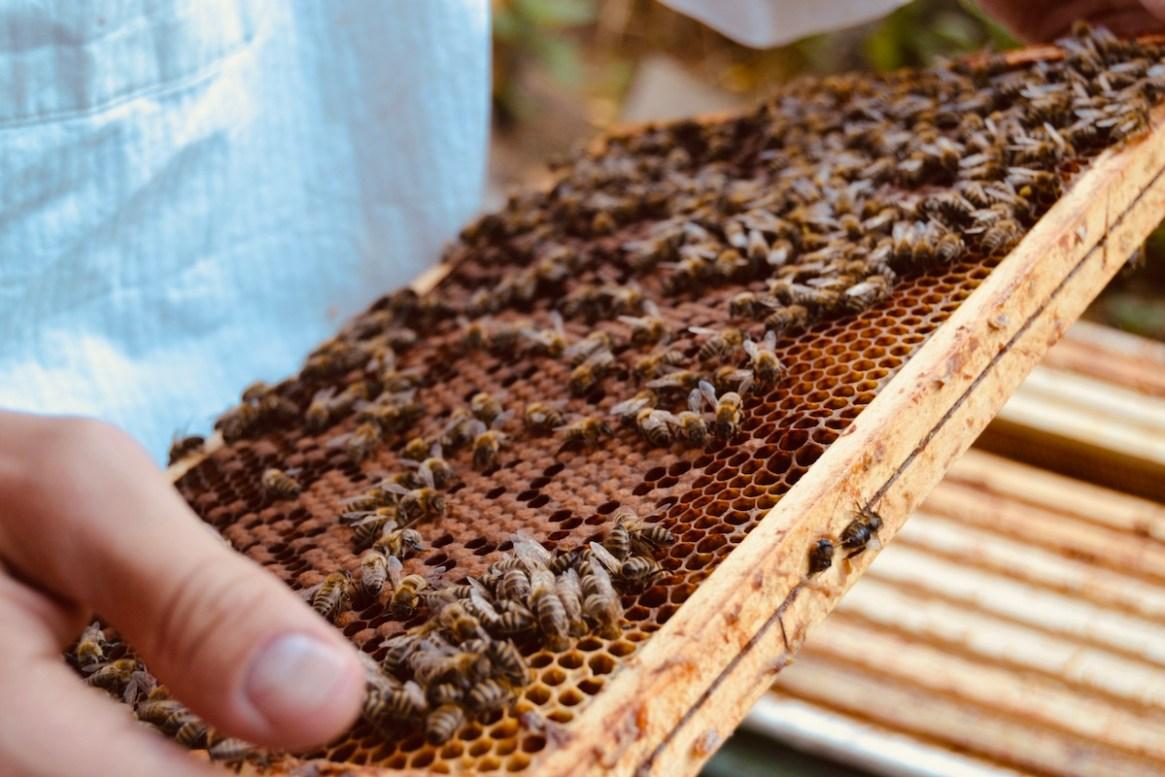 Im Oktober des Bienenjahres sollten die Bienenvölker noch einmal überprüft werden
