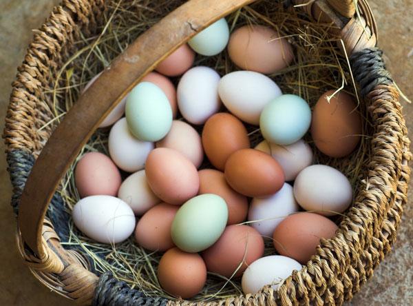 Eggses