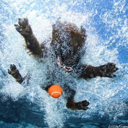 Photographies de chiens en contre plongée