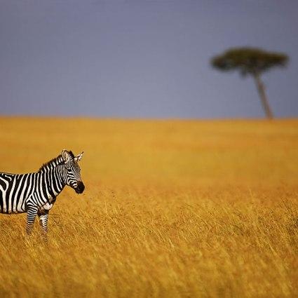 Beauty of Kenya