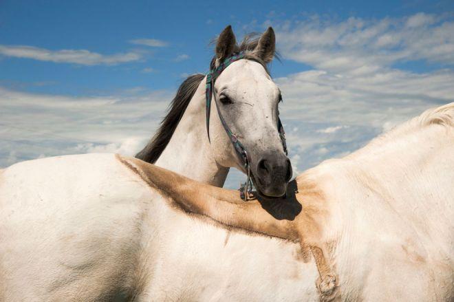 Horses, Montana by Albert Allard
