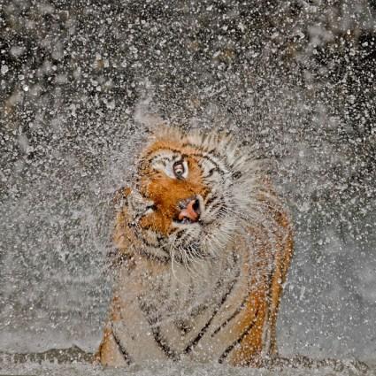 Les 14 photographies du National Geographic Photo Contest 2012
