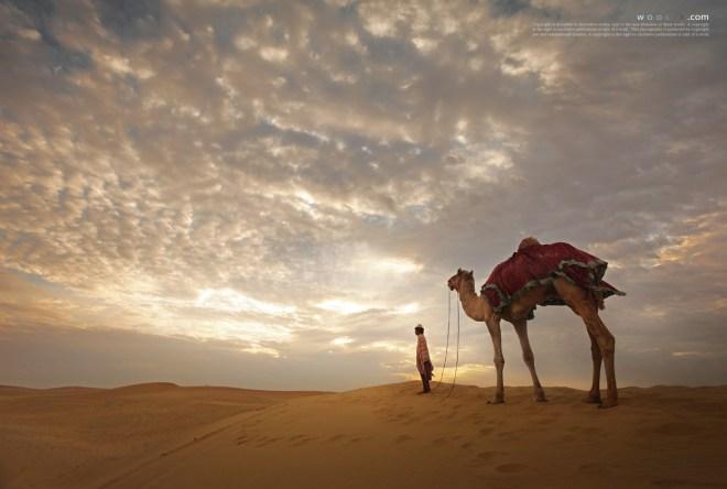 The desert of the morning calm