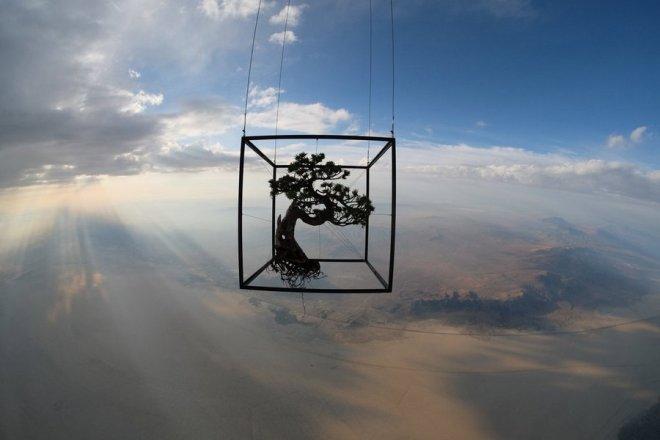 Exbiotanica - Makoto Azuma - Plants in stratosphere