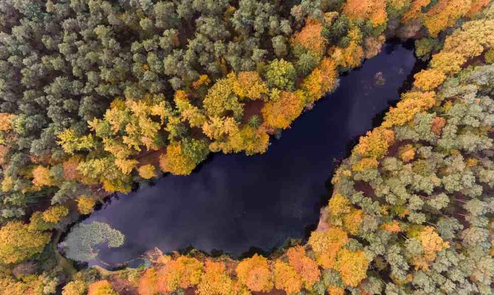 Arbres colorés dans la forêt de Kloevensteen, Hambourg, Allemagne (c) Rainer