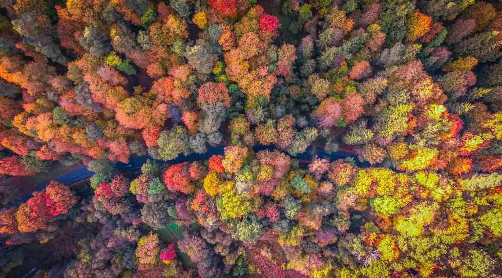 Forêt de Vilinus, Lituanie