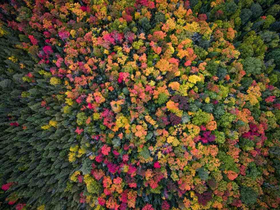 Les couleurs de l'automne recouvre les paysages sauvages de l'Ontario (c) Opseculate Aerial Media