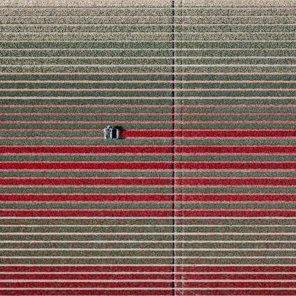 Aerial tulips / Tom Hegen