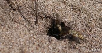 to their burrow/next
