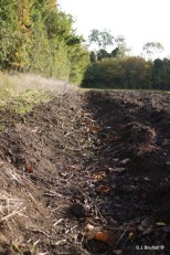 the bee burrows were all along the end of the ploughed furrow
