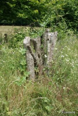 Hawthorn snag habitat
