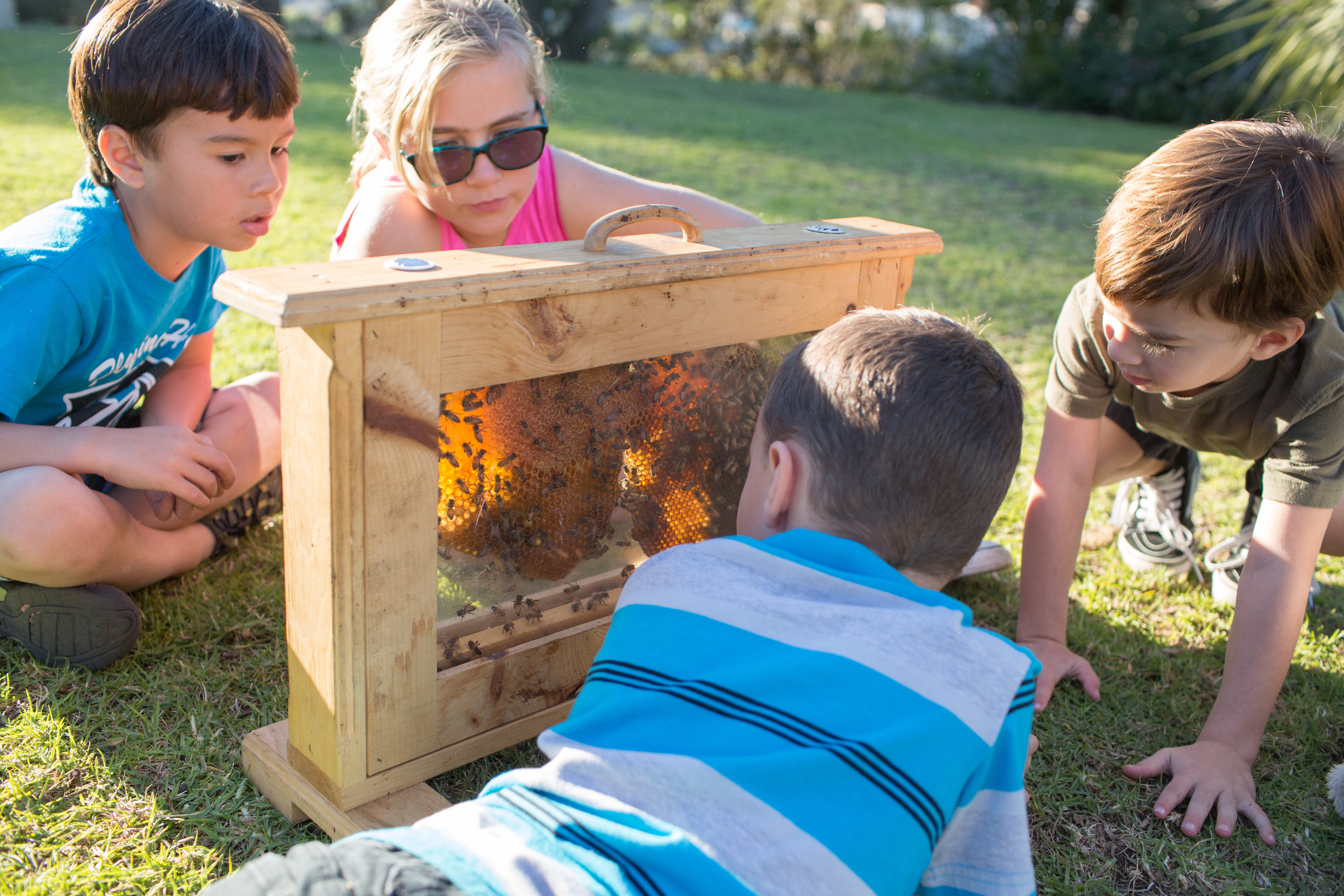 How To Teach Kids About Bees