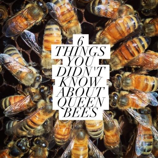 10 MISTAKES NEW BEEKEEPERS MAKE - Beekeeping Like A Girl