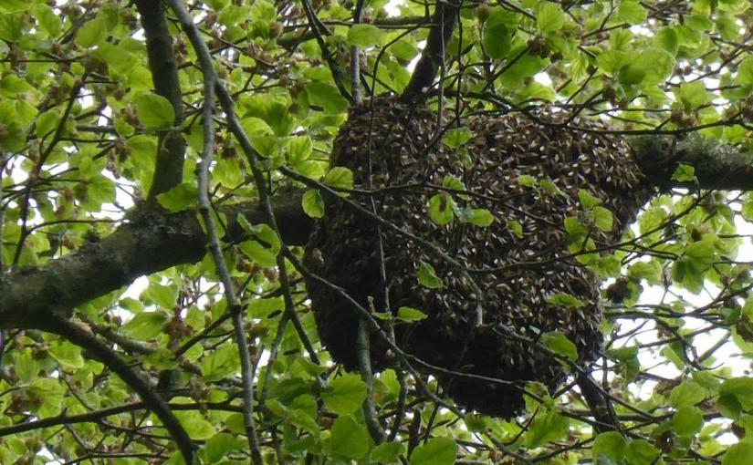 Swarm cluster
