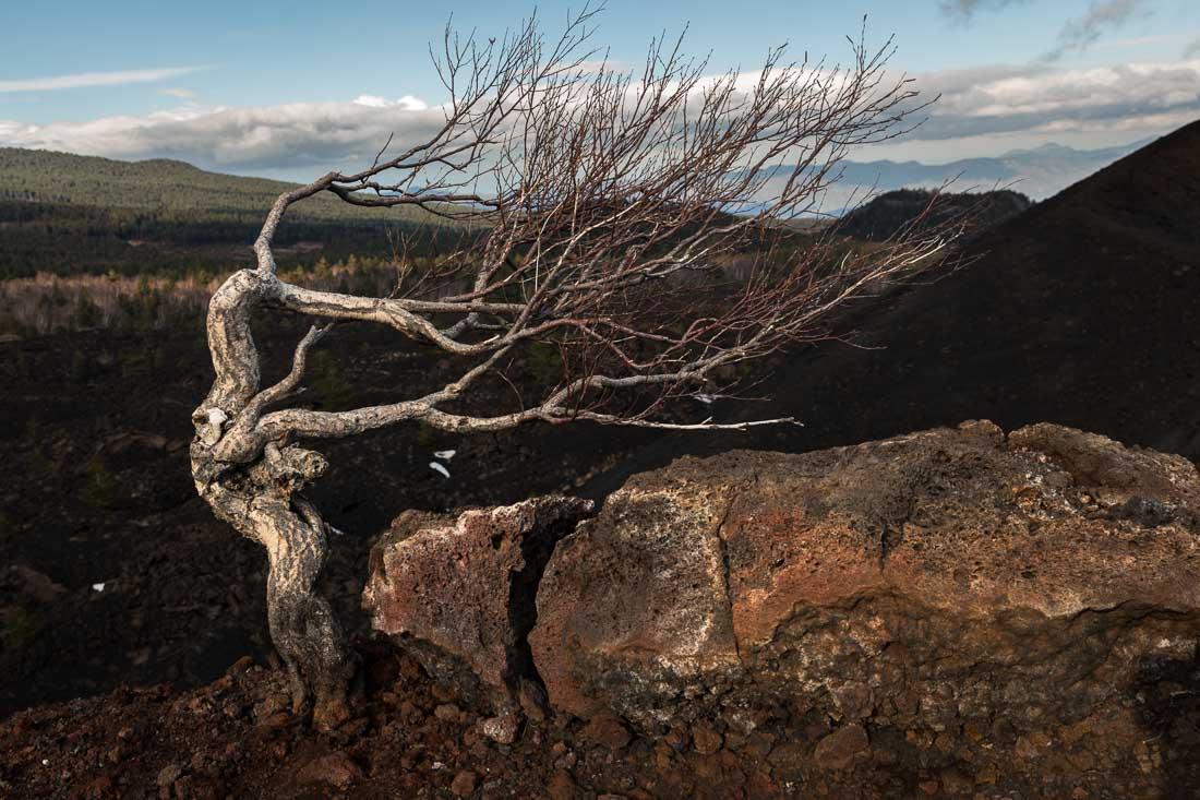 Berkje op een zijkrater van de Etna