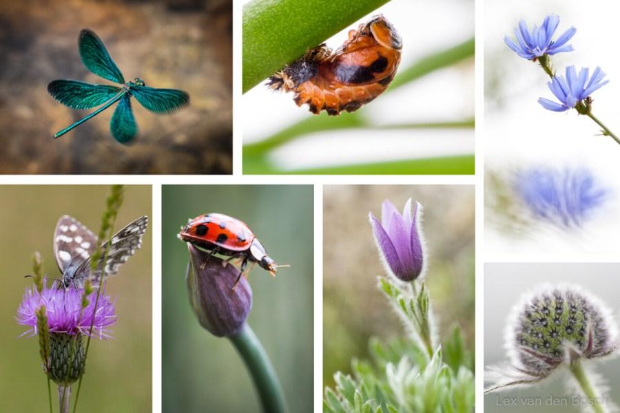 macrofotografie van insecten is echt iets voor gevorderde macrofotografen